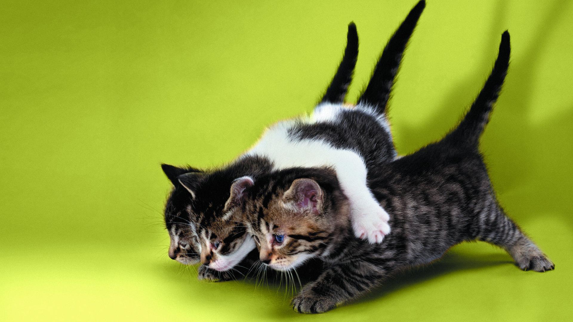 картинки на рабочий стол смешные коты